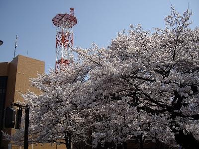 桜まつり1-20100403