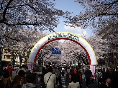 桜まつり2-20100403