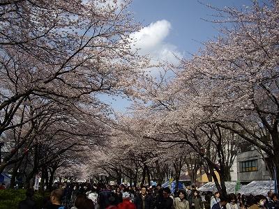 桜まつり4-20100403