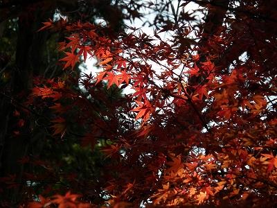 円覚寺境内の紅葉1-20101205