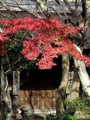 円覚寺居士林の紅葉20101205