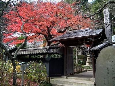 東慶寺の紅葉1-20101205