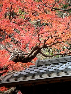 東慶寺の紅葉2-20101205