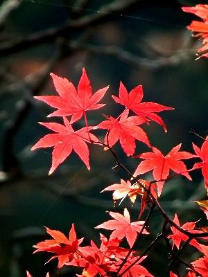 東慶寺の紅葉3-20101205