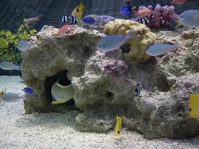 らん展展示水槽1-20110226