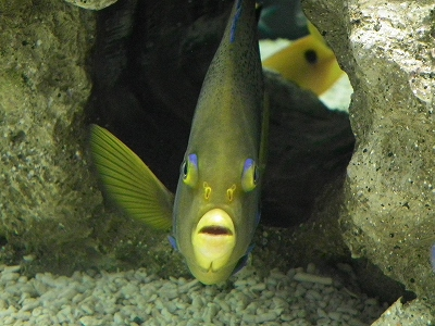 らん展展示水槽2-20110226