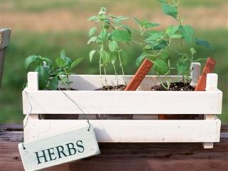 ハーブさんの小さな庭