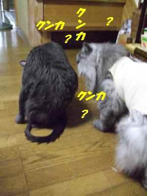 113713お風呂4