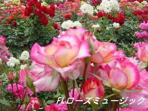 ローズミュージック2