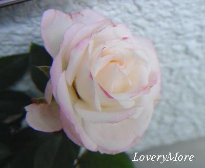 LoveryMore4.jpg