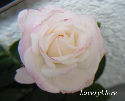 LoveryMore5.jpg