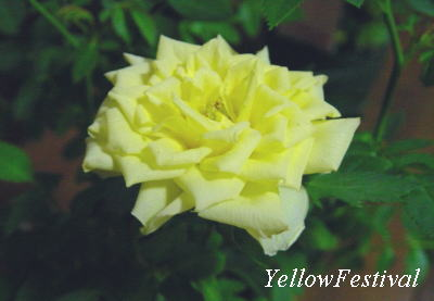 YellowFestival1.jpg