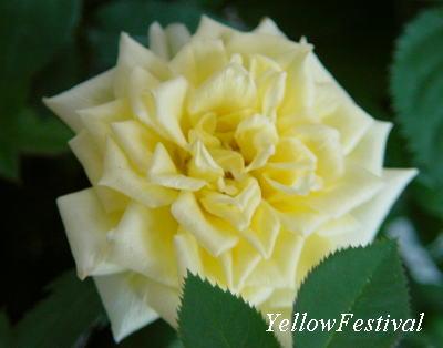 YellowFestival2.jpg