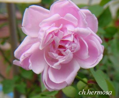 hermosa5.jpg