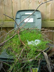 草木ゴミ箱