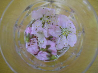 コップのお花