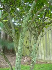 木の幹にも