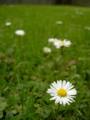 開花した風景