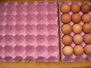卵ケース空
