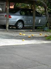 落ちたオレンジのアップ
