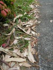 カーポートの落ち葉