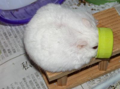 miyuki 20120212_7336