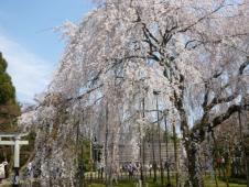足羽山公園8