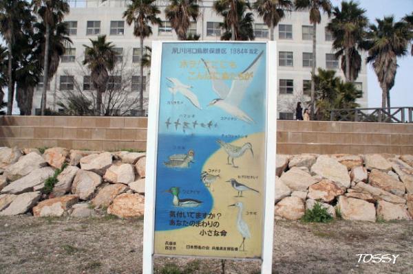 鳥獣保護区看板
