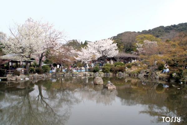 円山公園 池