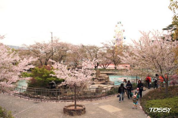 園内の桜2