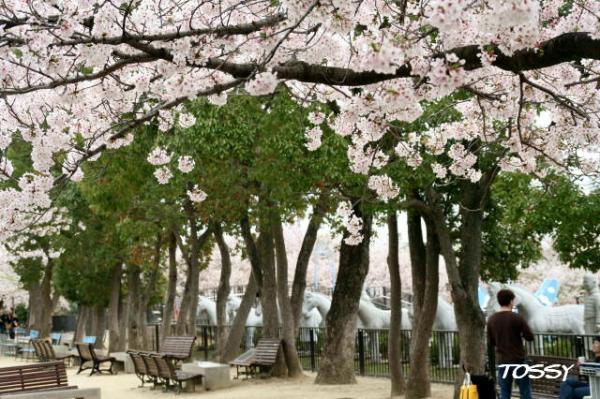 園内の桜5