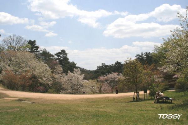 桜の園風景