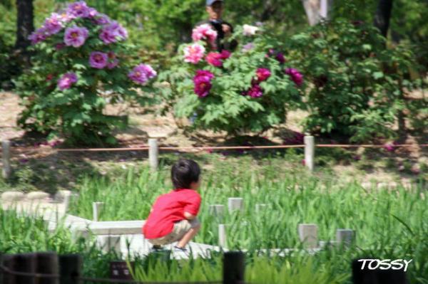 花菖蒲園のぼうや