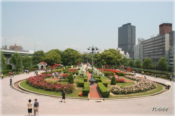 バラの広場1