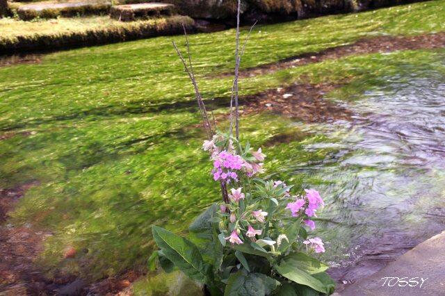 川の中の花