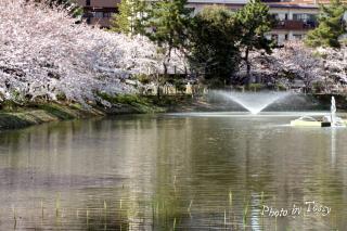 夙川5 片鉾池(かたほこいけ)の噴水1