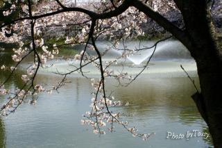 夙川6 片鉾池(かたほこいけ)の噴水2