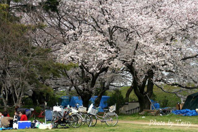 武庫川左岸 尼崎側 10 青いテントハウス