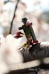 桜とロボット1