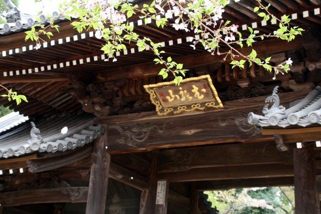 仁王門と散る桜