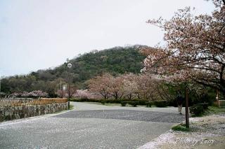 ダムサイトの遊歩道