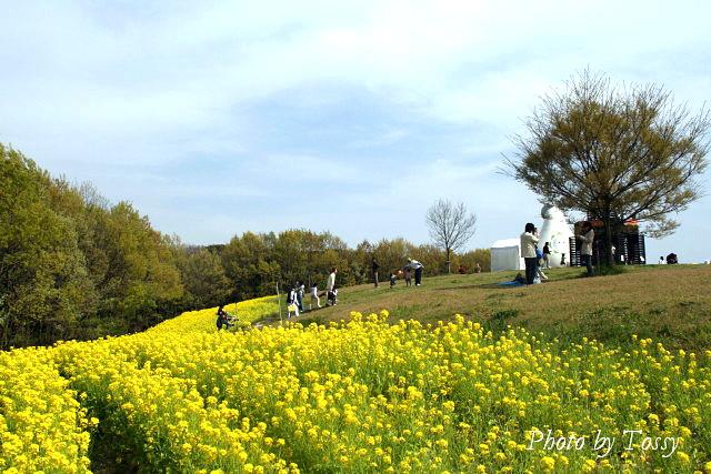 花の丘 菜の花