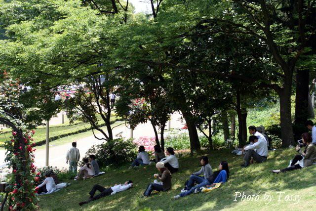 バラ園4 木蔭で休む人