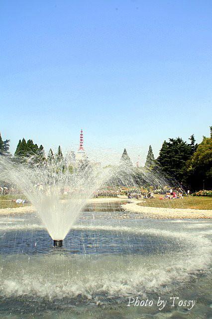 バラ園2 噴水