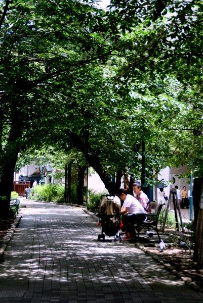 花の道 ベンチ