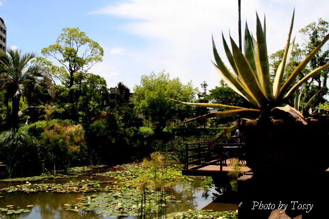 池の風景1