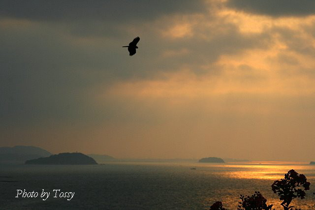 06:12 鳥