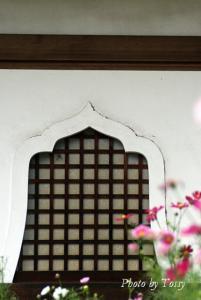 花頭窓とコスモス
