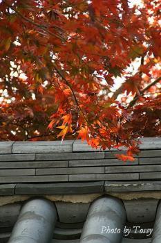 安養院 紅葉