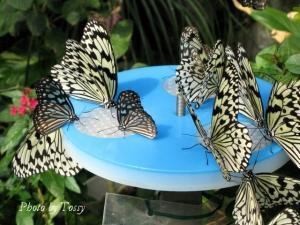 蝶のレストラン